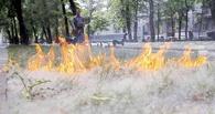МЧС запретило поджигать пух в Омске