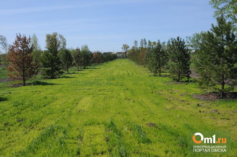 Омичи высадили в «Птичьей гавани» около 150 деревьев