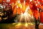 Светит, но не греет: в Омске на выходные обещают солнце