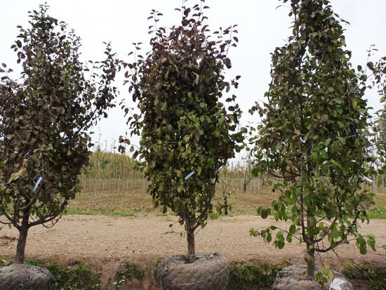В омском парке имени 30-летия ВЛКСМ высадили 225 деревьев