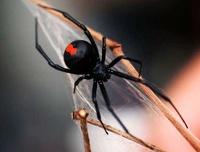 В Бразилии прошел дождь из пауков