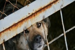 В омском «лагере смерти» собаки умирают от чумки