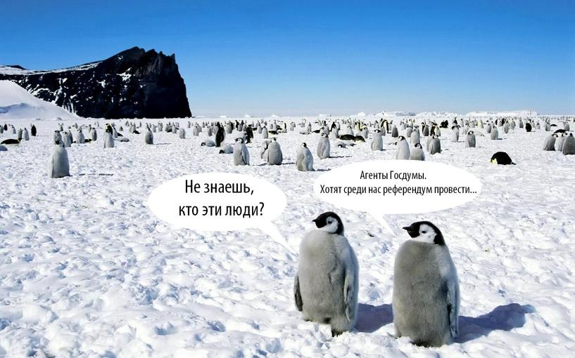 Пингвины, покер, боль. Интернет накинулся на заблудившихся в Антарктиде депутатов