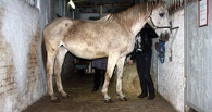 Омичей просят спасти породистых лошадей от смерти