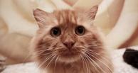 Молодой омич ножом и палкой забил насмерть кошку в подъезде дома
