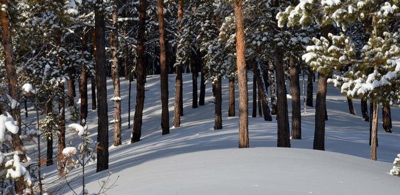 В лесах Омской области пропал охотник из Ханты-Мансийска