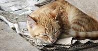 Из Омска в Германию на ПМЖ уехали 80 бездомных кошек