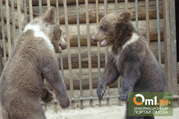 Медвежат в Большереченском зоопарке назвали в честь украинских певцов