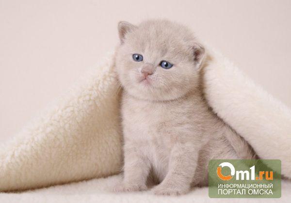 Российский банк выдал жительнице Екатеринбурга кредит на покупку кота
