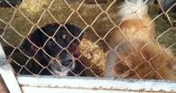 Неравнодушные омичи спасли собак из приюта на Барабинской