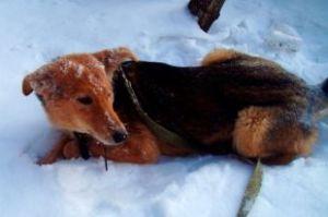 В Омске «Собачий концлагерь» все-таки продолжит работать