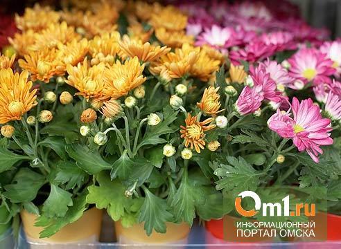 В Омске в «Ленту» и «Метро» завезли партию зараженных хризантем