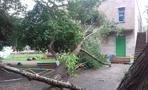 В Омске на детский сад в Нефтяниках упало дерево