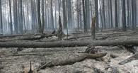 Из-за прохладной погоды в Омске снизился уровень угрозы пожаров