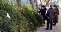 Для Омска спилили 38 тысяч новогодних елок