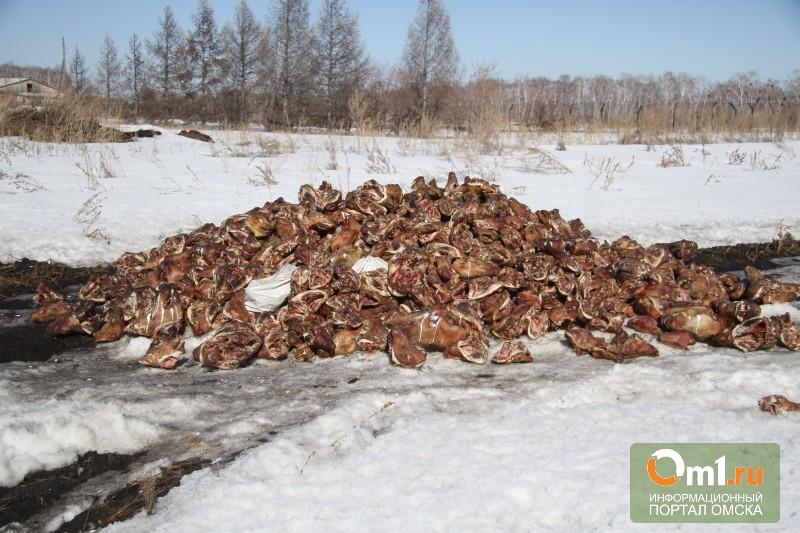 Под Омском обнаружили огромную кучу свиных голов
