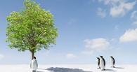 В Омске готовиться к озеленению города будут даже зимой