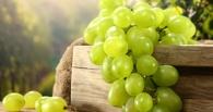 В Омск не пустили 17 тонн винограда