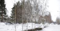 В Омске отрабатывается новый порядок компенсационного озеленения