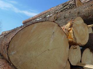 В Омской области ребенок пострадал, когда валил лес с отцом