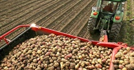 План по сбору картошки и овощей в Омской области почти выполнен