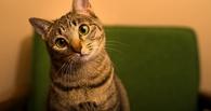 Омича отправили в колонию за убийство кота