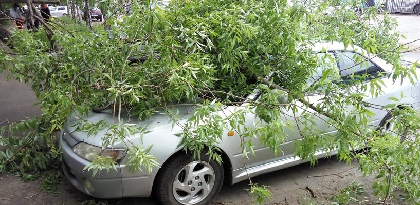 В Омске дерево рухнуло на припаркованную иномарку