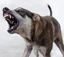 Двухлетнюю девочку из Омской области покусала соседская собака