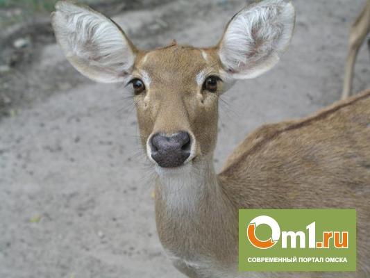 В Омской области браконьер убил косулю