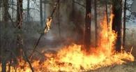 В праздничные дни в Омской области произошло 28 лесных пожаров
