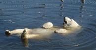 Омские власти опровергли факт затопления Большереченского зоопарка