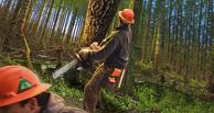 В Омской области лесоруба раздавило упавшим деревом