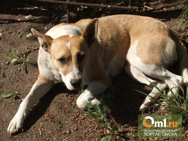 Полиция Омска начала проверку информации о зверском убийстве собаки на глазах у детей