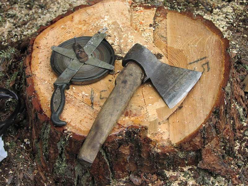 Эра лесорубов: озеленение Омска