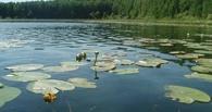 К озеру Линево в Омской области запретят приближаться туристам