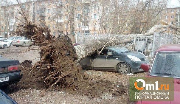 Семьям погибших от урагана омичей выплатят по 300 тысяч рублей