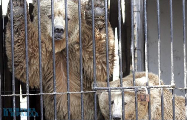Животных из Большереченского зоопарка перевезут в Омск