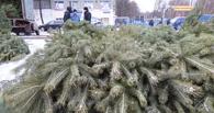 В Омске продавали новогодние елки, которые могли быть заражены вредителями
