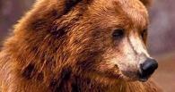 Омские полицейские обнаружили в гараже медведицу
