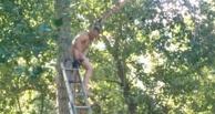 В Омске спасатели несколько часов снимали с дерева голого мужчину (ФОТО)