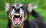 В Омской области заражаются бешенством домашние животные