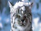 Омский Гидрометцентр обещает снег и метели на выходные