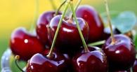 В Омск не пустили больше 33 тонн свежей черешни