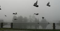 В Омске утром ожидается туман