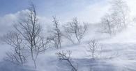 Аномальное тепло и метель в Омск принес циклон «Десмонд»