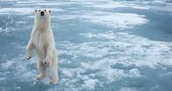 Тепло в Омск придет после арктических морозов