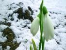 Плюсовая температура в Омске установится с 10 апреля
