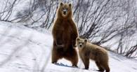 В Омской области посчитают диких животных