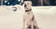 Омские осужденные будут отбывать наказание в собачьем приюте «Друг»