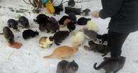 В Омской области спасают стихийный приют с кошками